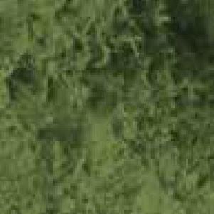 Machová a trávičkoá pasta - Tmavozelená 34741-min